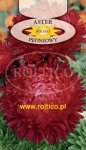 Aster peon. czerwony ROLTICO e-rosa_pl